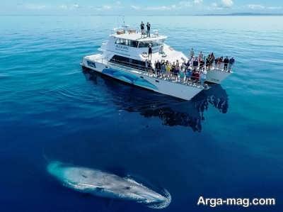 بازدید از خلیج جزایر در نیوزلند