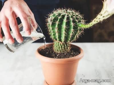 آبیاری مورد نیاز گیاه پرسیکا