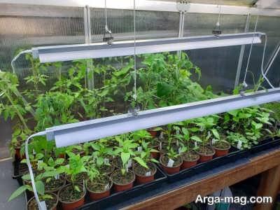 تاثیر لامپ فلورسنتی بر رشد گیاهان