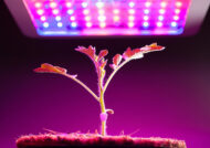 آشنایی با انواع لامپ برای گیاهان