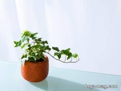 اصول کاشتن گیاه پایپتال