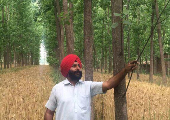 آشنایی با نحوه کاشت درخت صنوبر