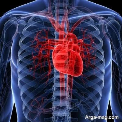 تاثیر گرده نخل در عملکرد های بدن