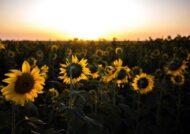 متن درباره طلوع خورشید