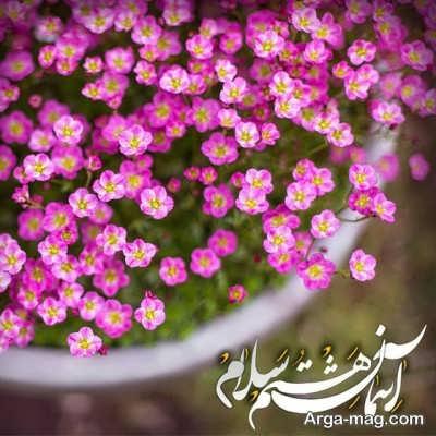 متن تبریک ولادت امام رضا