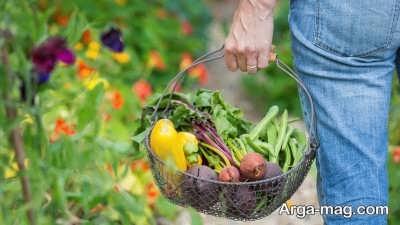 اشنایی با انواع سبزیجات