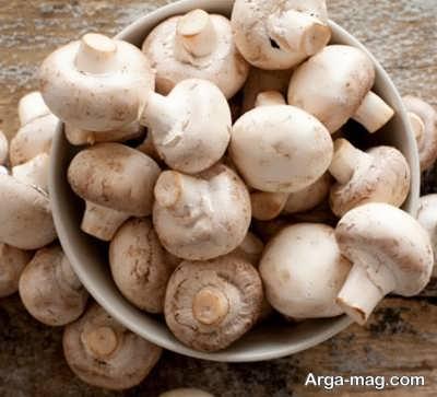 خصوصیات بارز قارچ ها