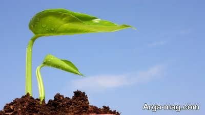 چگونگی افزایش نیتروژن خاک