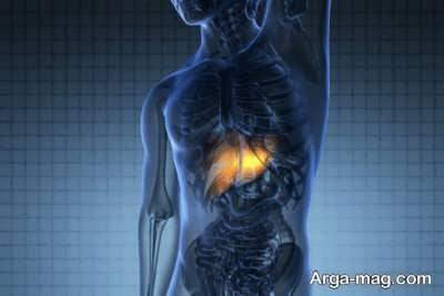 نحوه عملکرد کبد در بدن