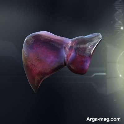 خصوصیات آناتومی کبد