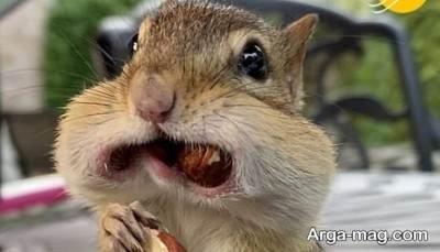دیدن رویای سنجاب از نظر آنلی بیتون