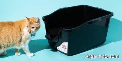 تاثیر جوش شیرین بر بوی بد گربه ها