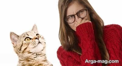 روش های از بین بردن بوی بد خاک گربه ها