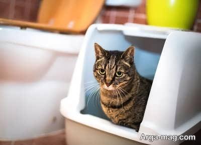 دلایل ایجاد بوی بد گربه ها