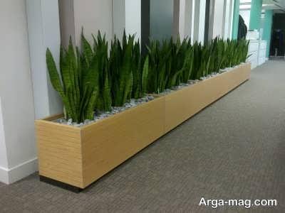 آشنایی با گیاهان راهرویی