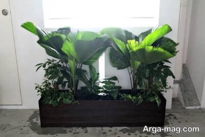 انواع گیاهان مینیاتوری