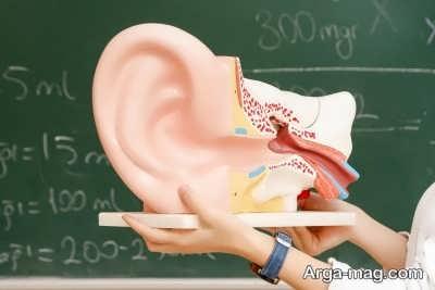 خصوصیات گوش میانی