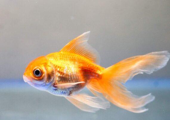 آشنایی با آناتومی ماهی