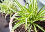 آشنایی با نحوه نگهداری از گیاهان در تابستان