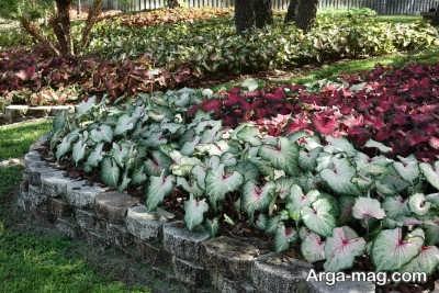 راه های نگهداری از گیاهان در تابستان