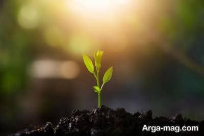 تاثیر نور کافی بر رشد بهتر گیاهان
