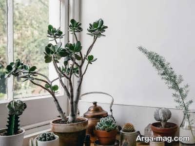 چگونگی نگهداری از گیاهان در تابستان