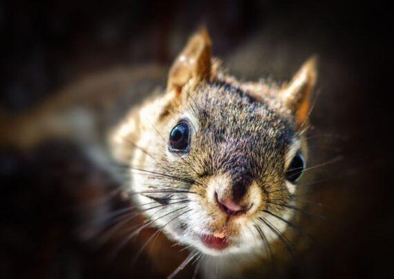 آشنایی با نحوه تربیت سنجاب