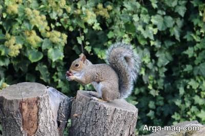 شناخت خصوصیات سنجاب ها