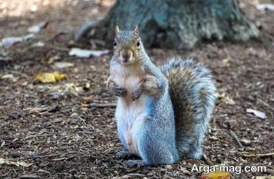 چگونگی تربیت سنجاب ها