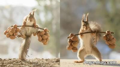 چگونگی تغذیه سنجاب ها