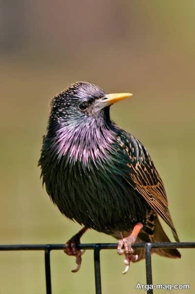 زیستگاه اصلی پرندگان سار