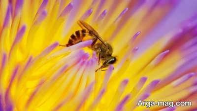 ویژگی های حشره زنبور