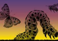 آشنایی با دانستنی های علمی حشرات