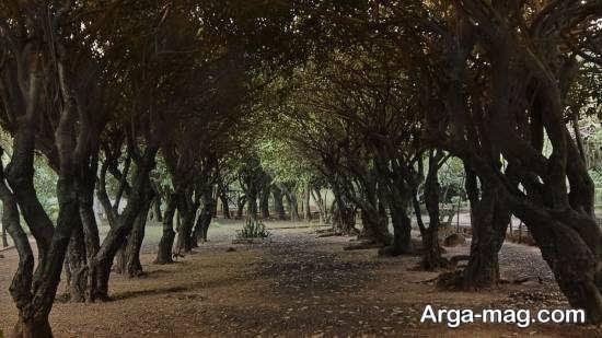 راهنمای سفر به پاراگوئه ی گردشگر پرور