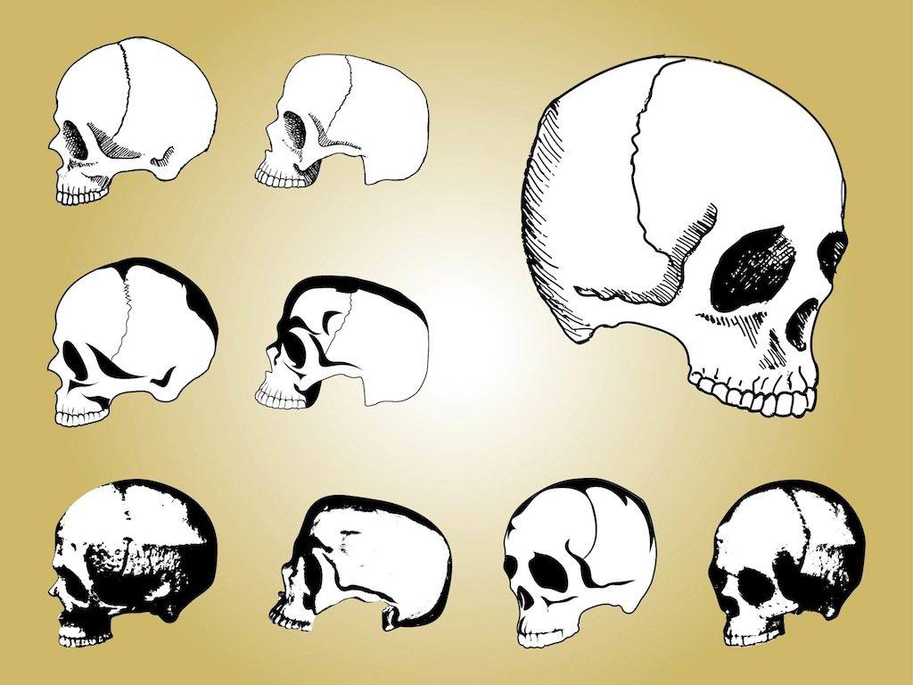 آشنایی با آناتومی جمجمه انسان