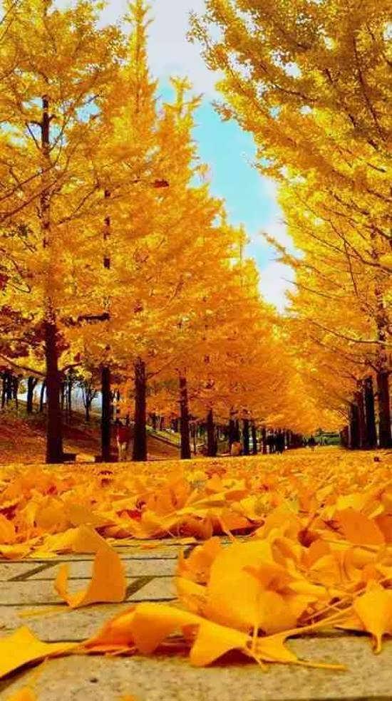 انواع تصاویر خاص و جذاب پاییز