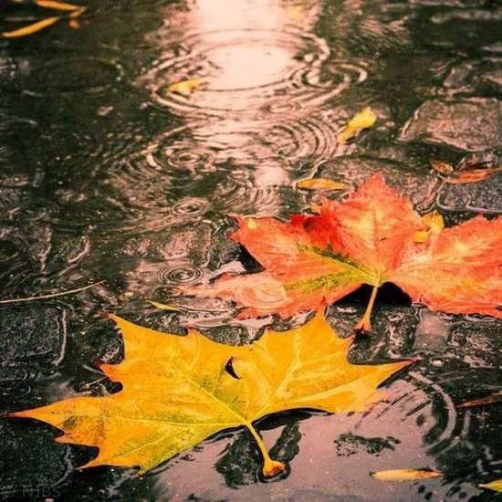 انواع تصویر پروفایل باحال پاییز