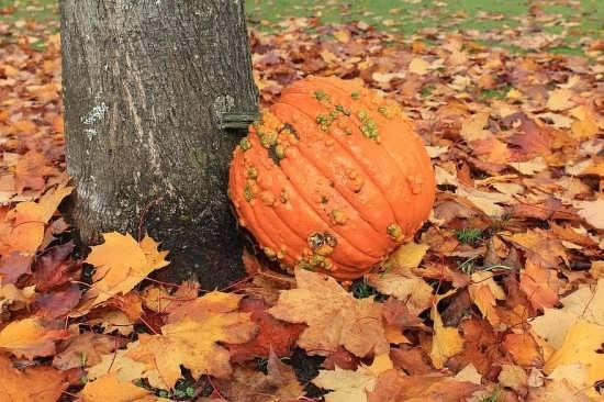 انواع تصویر پروفایل های متفاوت پاییز
