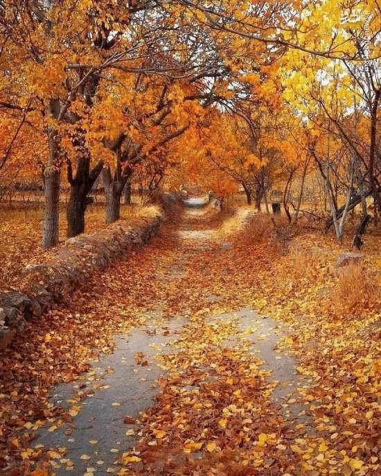 عکس های شخصی و جذاب پاییز