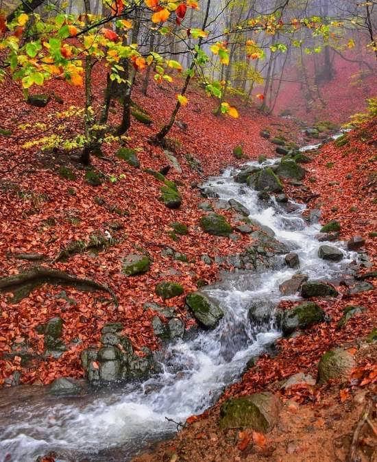 انواع عکس پروفایل پاییز زیبا