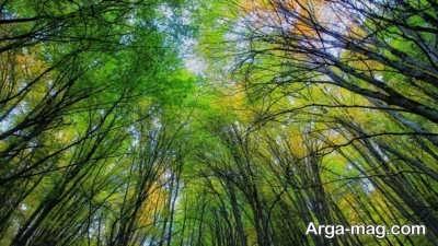 شعر زیبا درباره جنگل