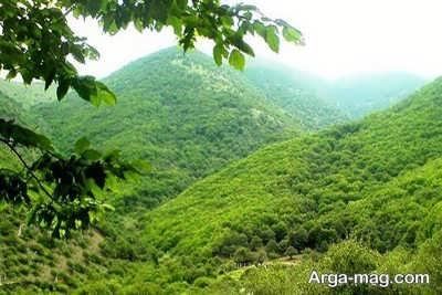 شعر در وصف جنگل