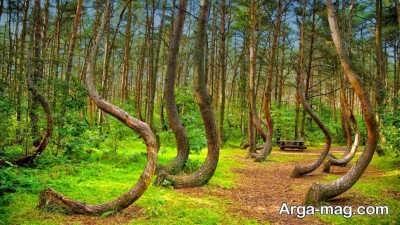 شعر زیبا درباره جنگل با ابیاتی ناب