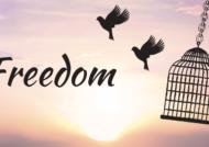 متن زیبا درباره آزادگی