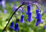 آشنایی با نحوه پرورش گل استکانی