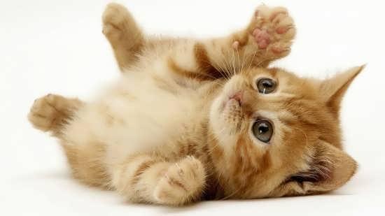 سری اول عکس گربه برای پروفایل
