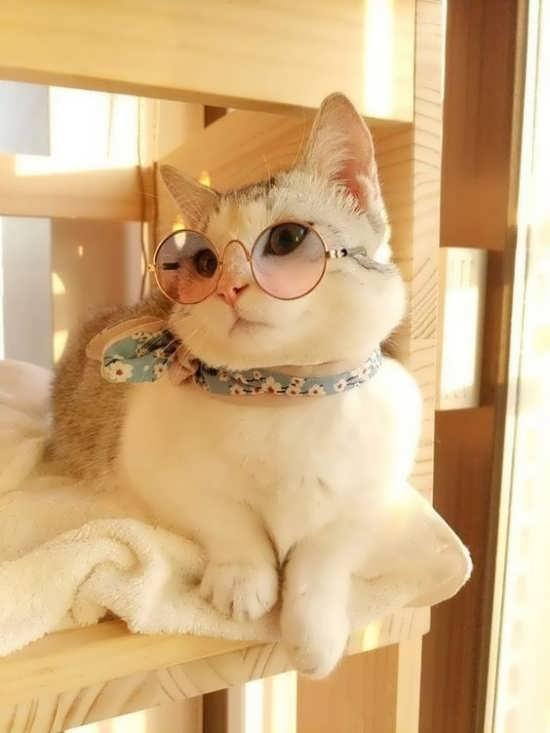 تصویر گربه لاکچری برای پروفایل
