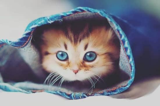 سری جدید عکس گربه برای پروفایل