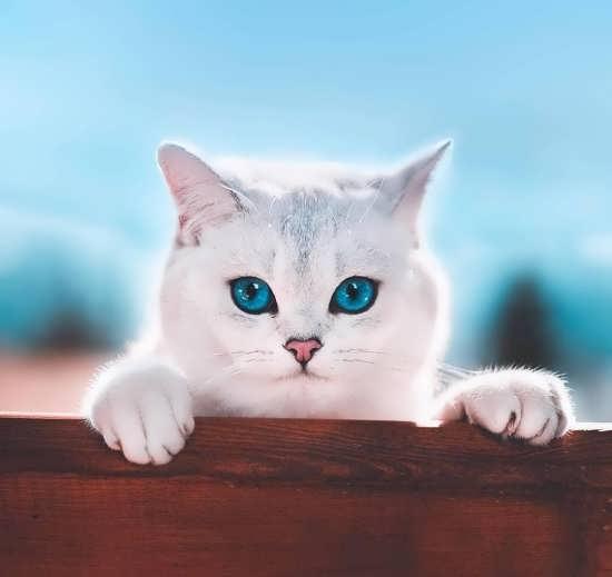 تصویر بانمک از گربه ملوس
