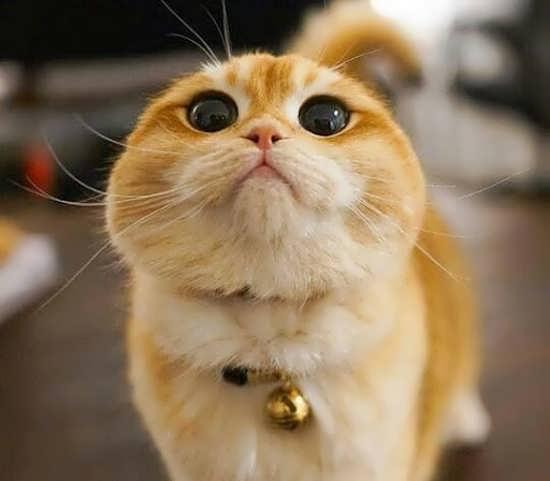 انواع مختلف عکس گربه برای پروفایل